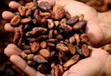 4 raisons d'investir dans le cacao