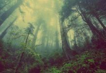 comment investir dans le bois